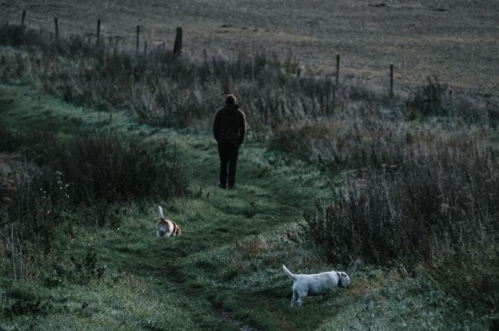 Promener son chien  : mode d'emploi !